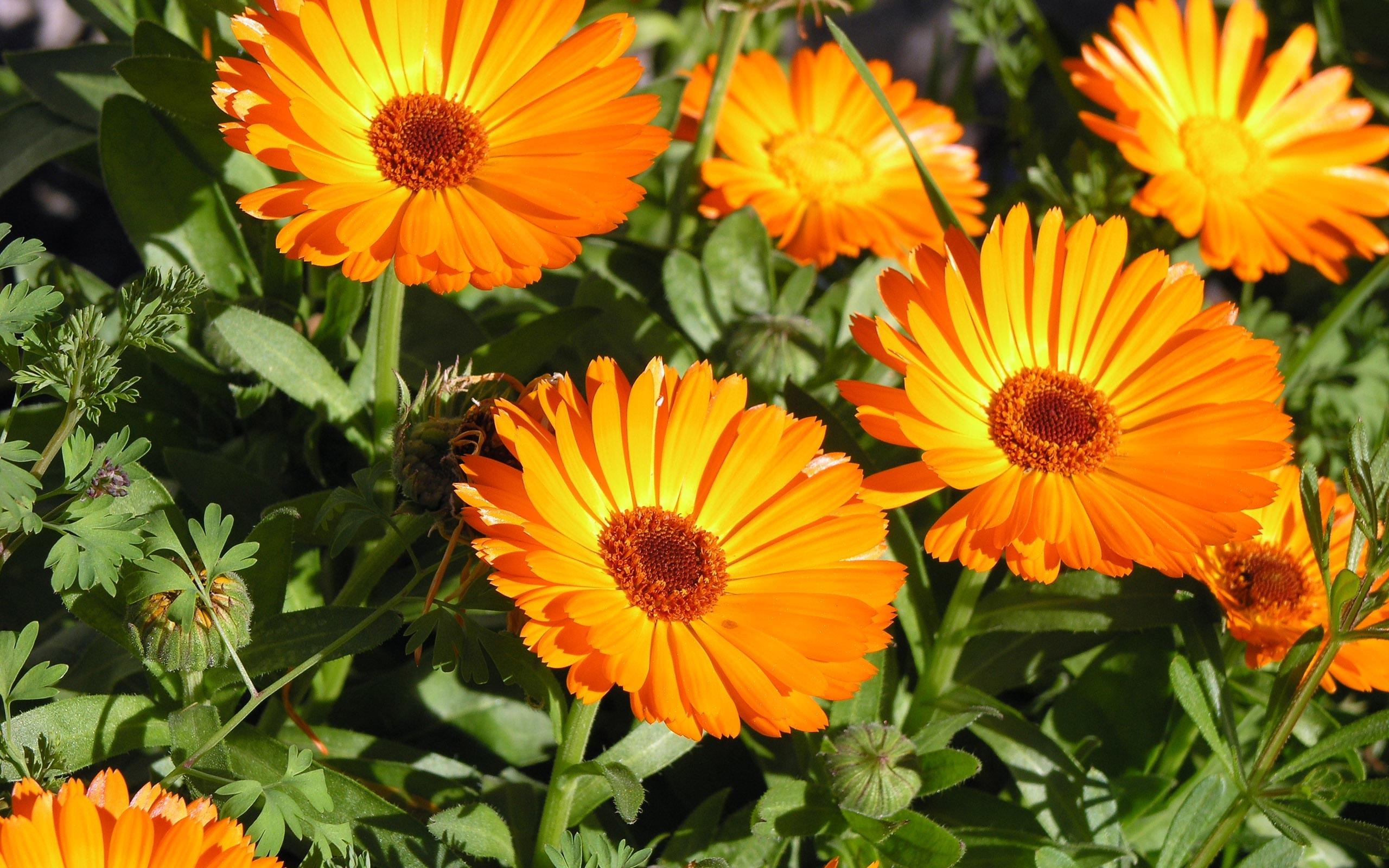 orange flowers splendid