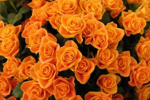 orange flowers wallpapers free