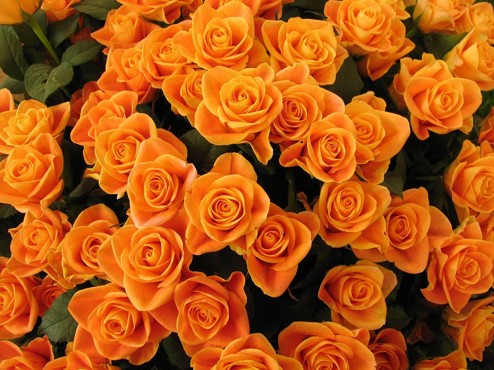 orange flowers wallpapers free