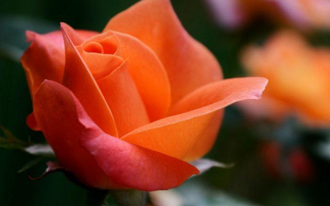 orange macro pictures A2