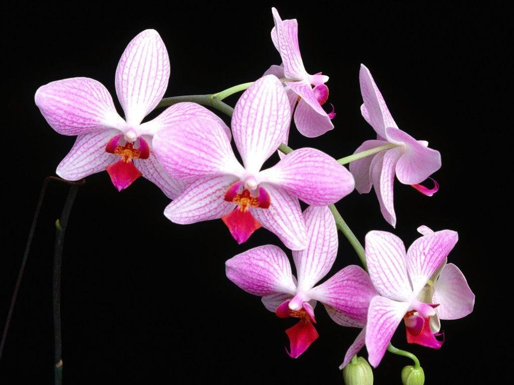 orchid backgrounds