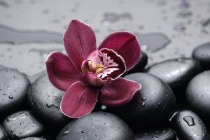 orchid flower wallpaper