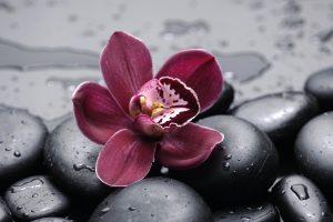 orchid flower wallpaper