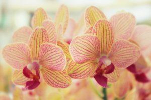 orchid pics