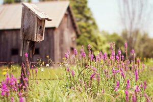 purple flowers field summer nature
