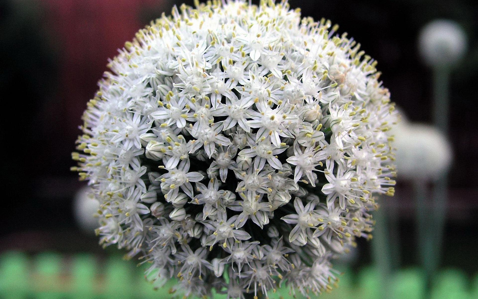 perennial flowers A2