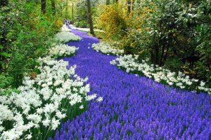perennial flowers A4