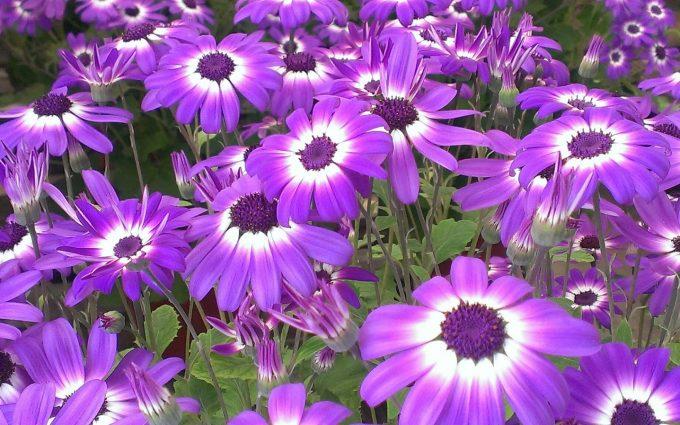 perennial flowers Cool