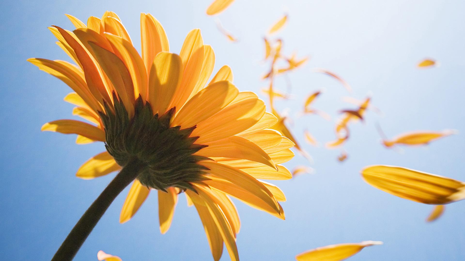 Blowin In The Wind HD Desktop Background