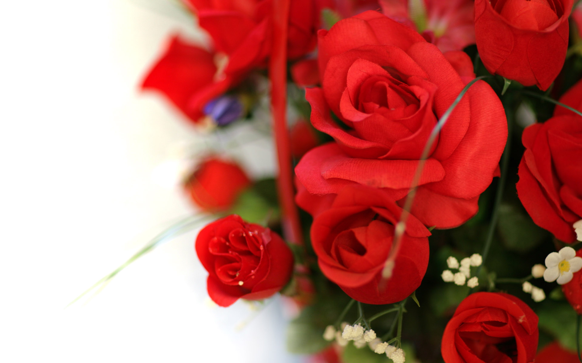 photos of red roses download free