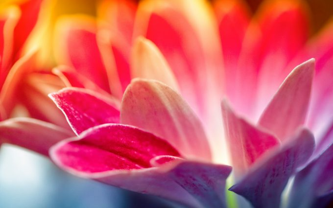 pictures of pink and white flowers