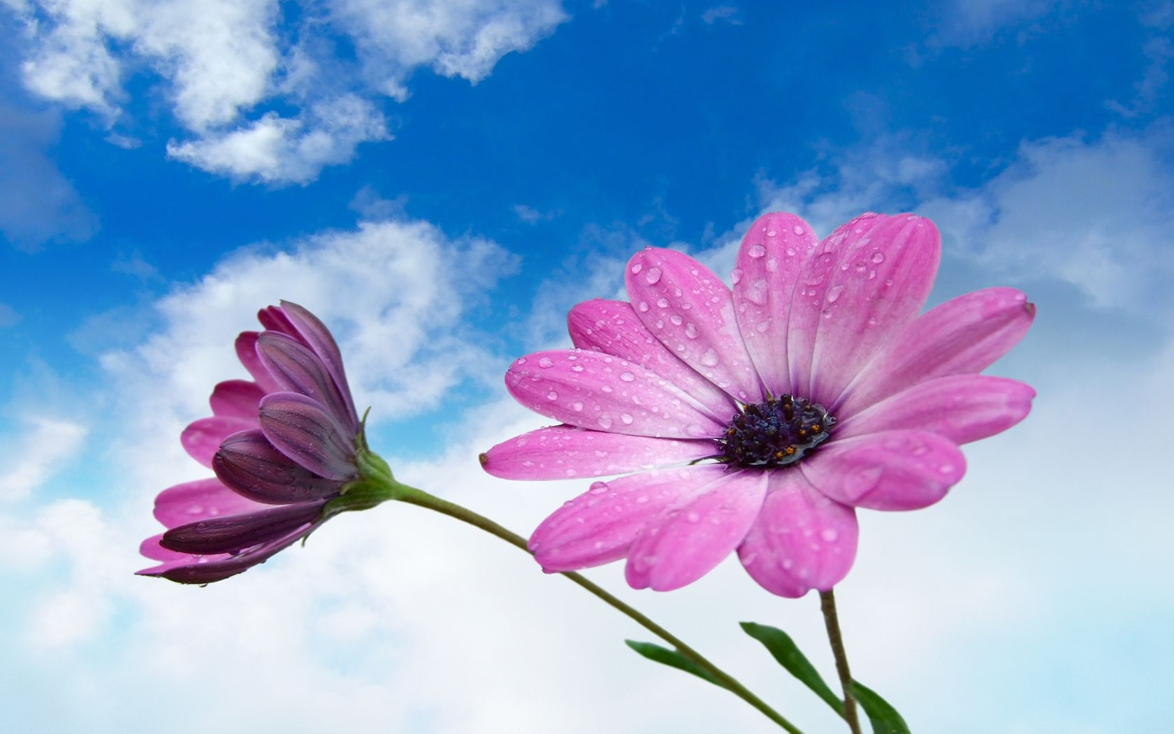 pink and purple flower wallpaper - HD Desktop Wallpapers ...