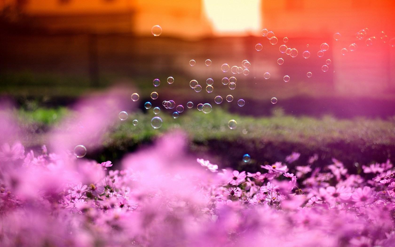 pink bubbles sun nature