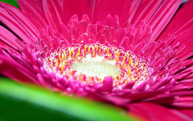 pink colour flower images