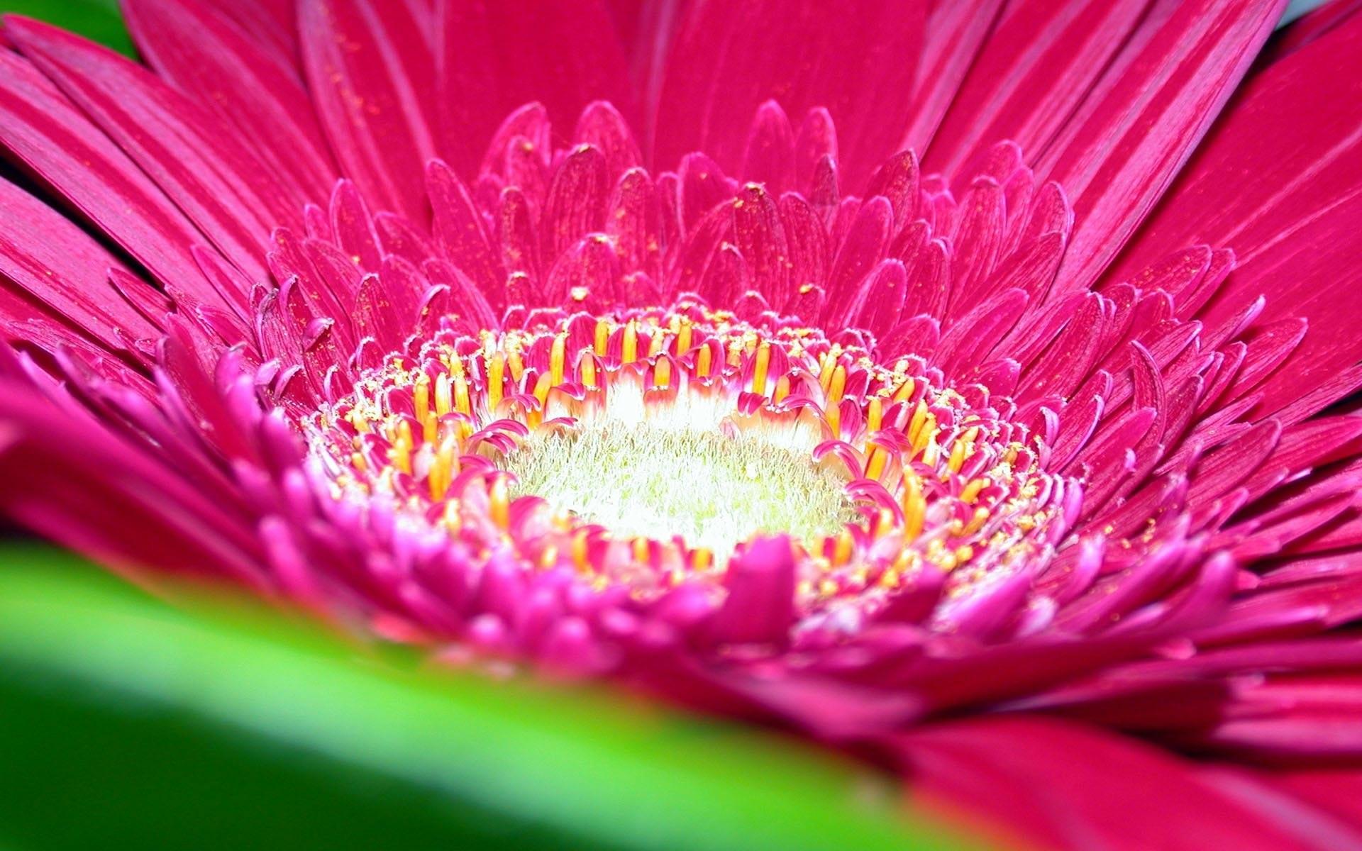 pink colour flower images