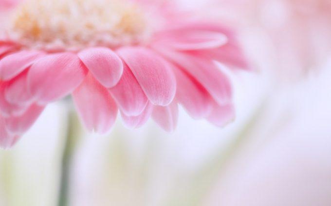 pink flower A1