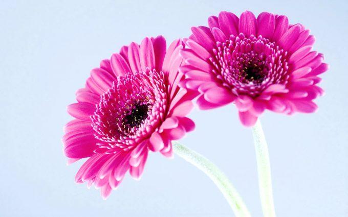 pink flower image