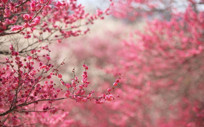 pink flower images