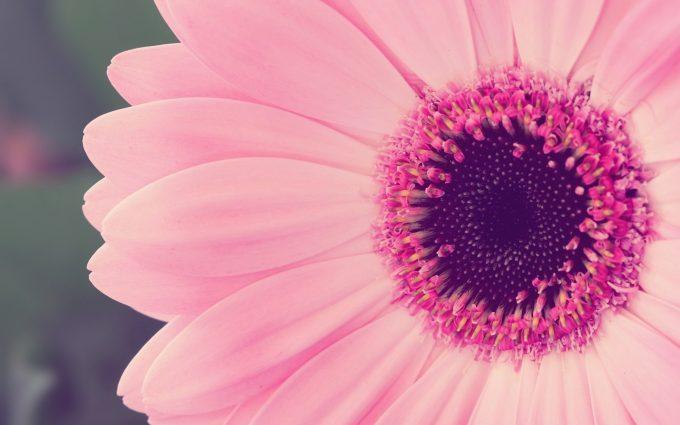 pink flower lovely