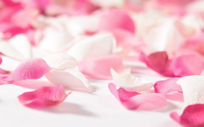 pink flower petals hd