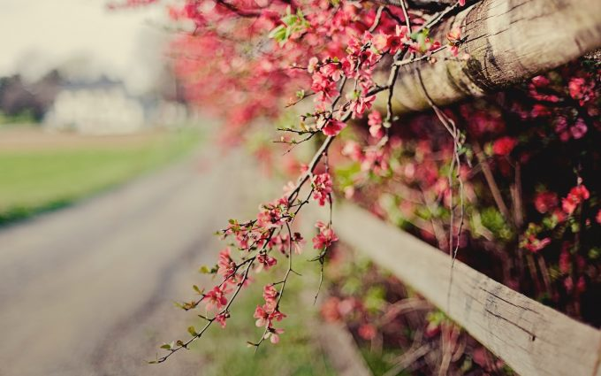 pink flowers fence nature bokeh