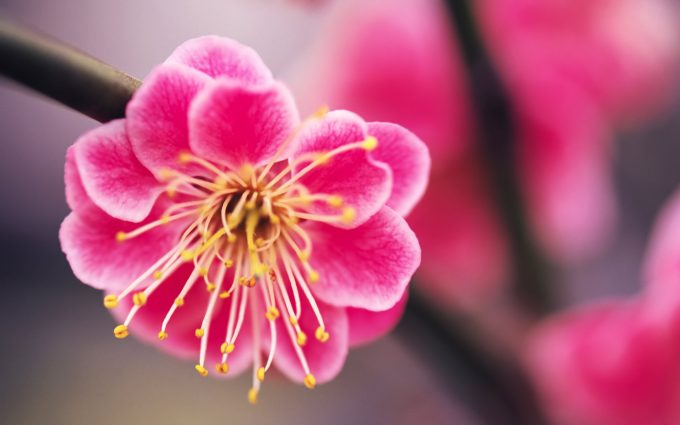 pink flowers pictures