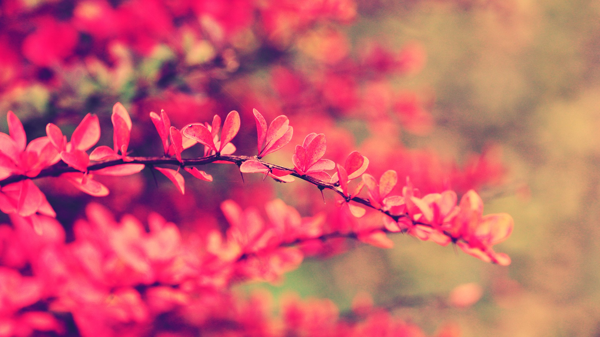 wallpapers pink flowers - photo #13