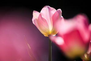 pink macro