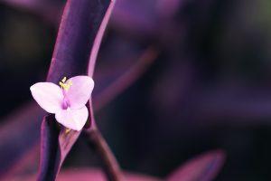 pink macro flowers wallpaper