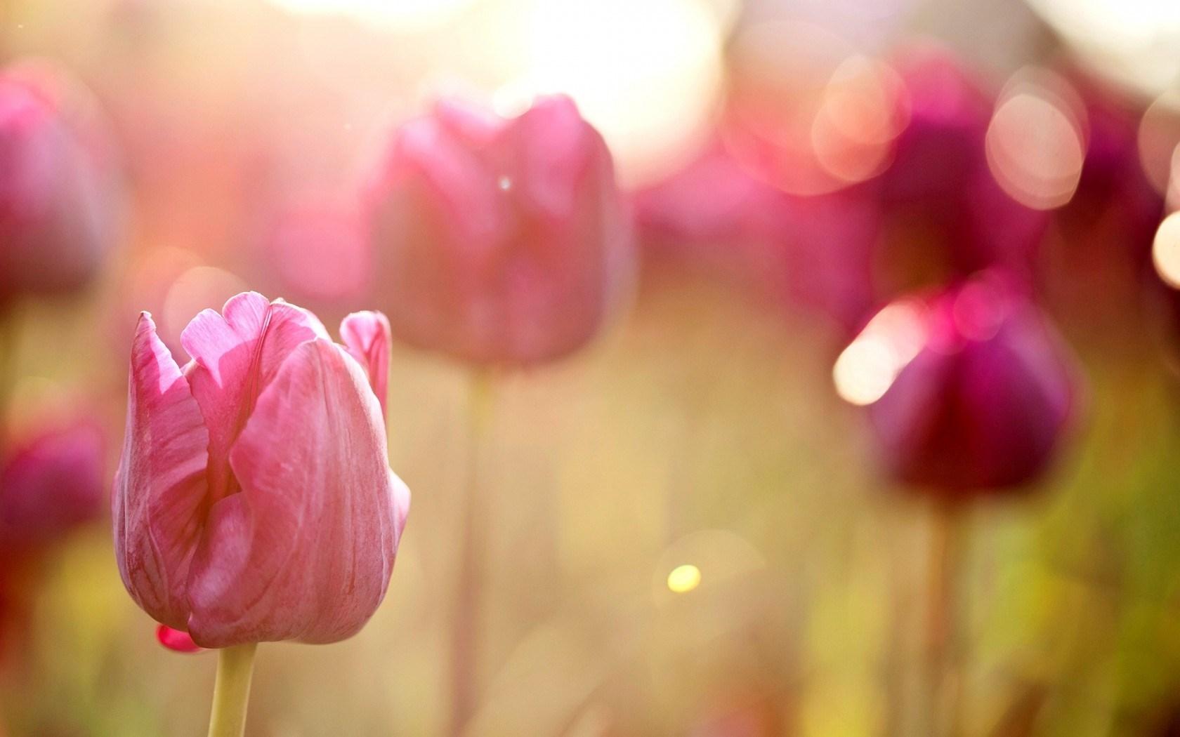 pink macro hd