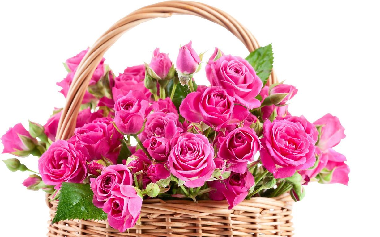 Pink Rose Flower Wallpaper Hd Hd Desktop Wallpapers 4k Hd