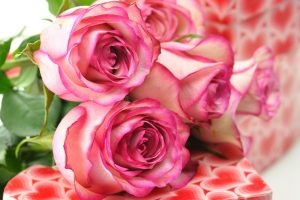 pink rose wallpaper awesome