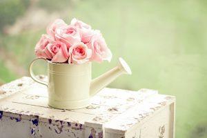 pink rose wallpaper free download