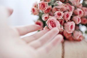 pink rose wallpaper lovely