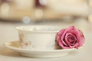 pink rose wallpapers hd