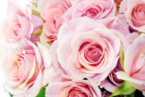pink roses wallpaper desktop