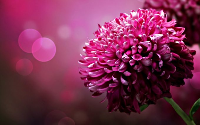 pretty flower backgrounds