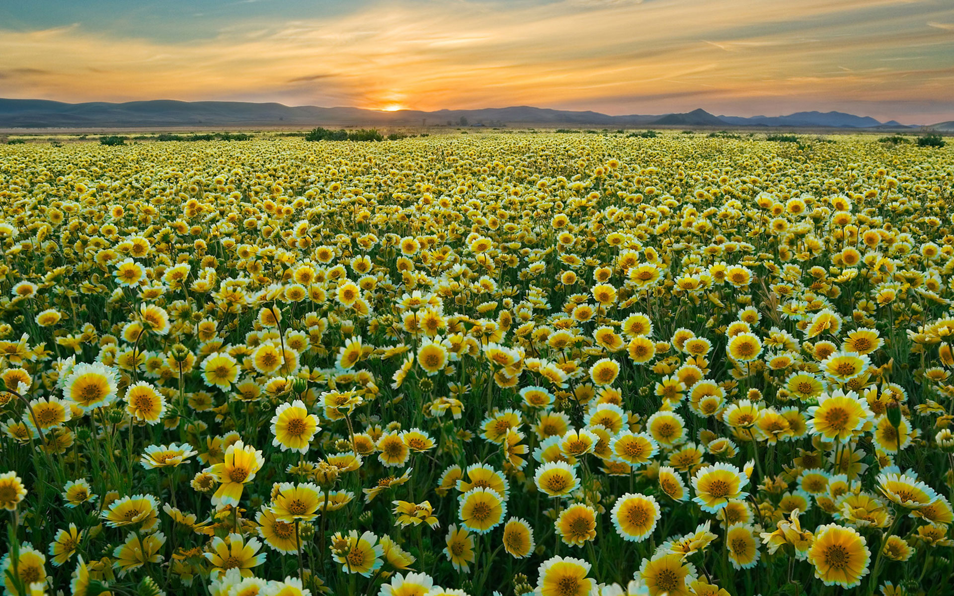 pretty flower field wallpaper