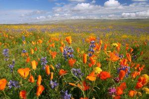 pretty flower meadow