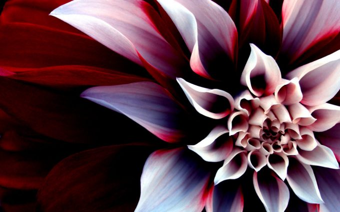 pretty flower wallpapers