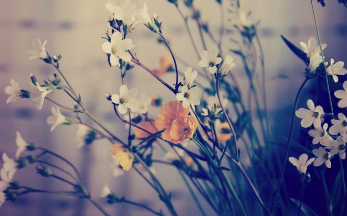 pretty macro flowers