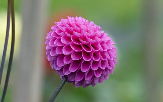 pretty pink flower pictures