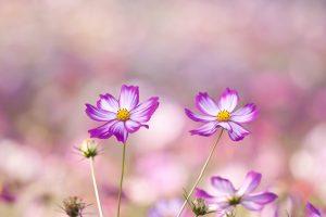 pretty summer flowers