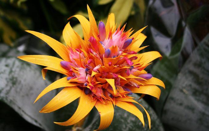 pretty tropical flowers