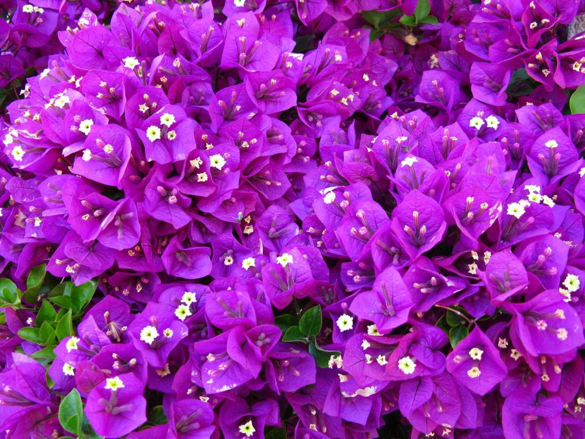 purple floral wallpaper designs