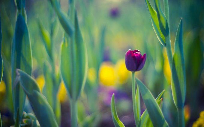 purple flower A11