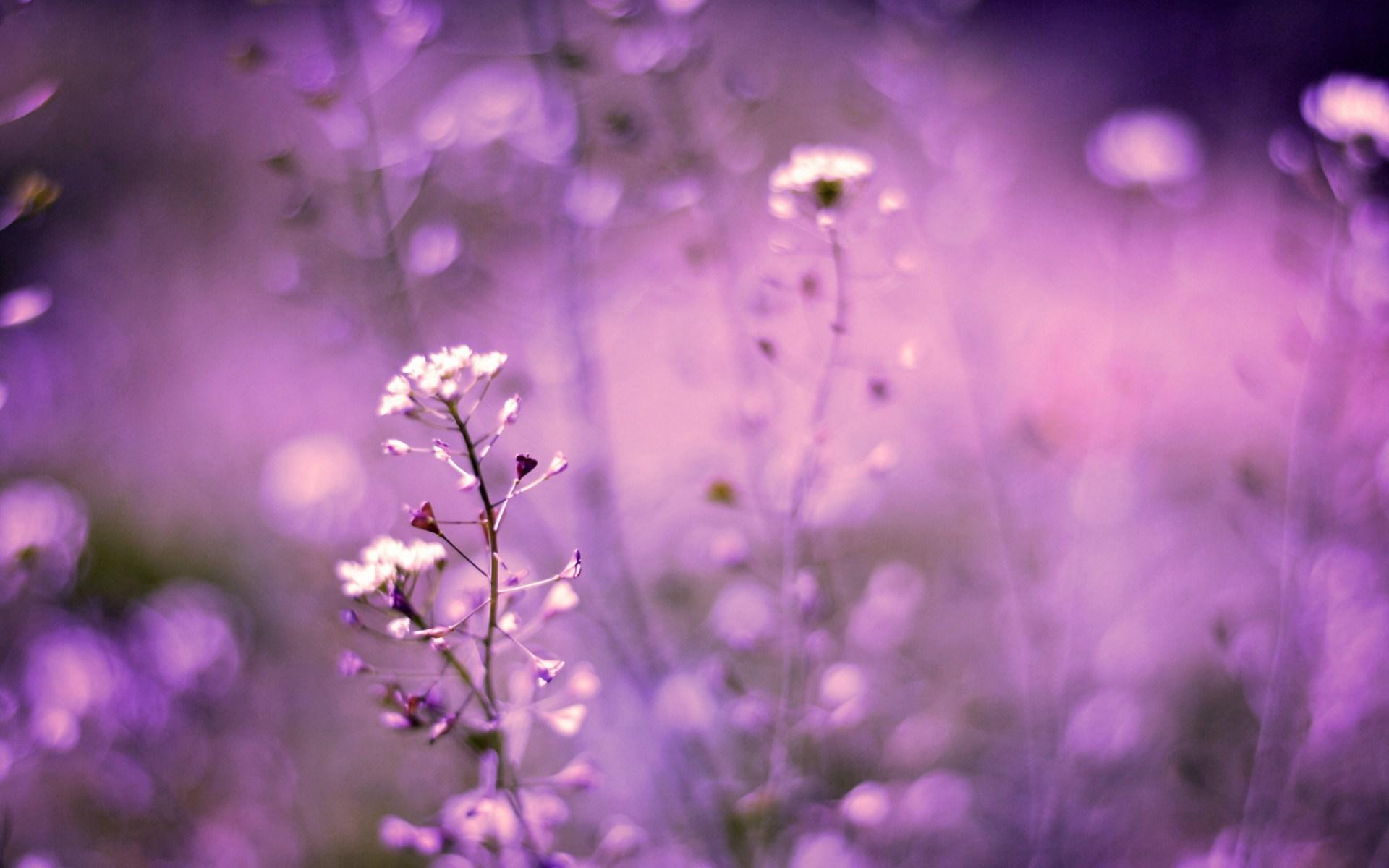 purple flower A12