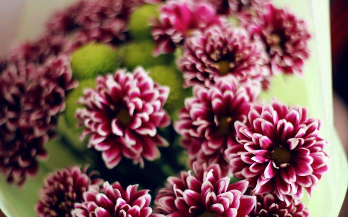purple flower A13