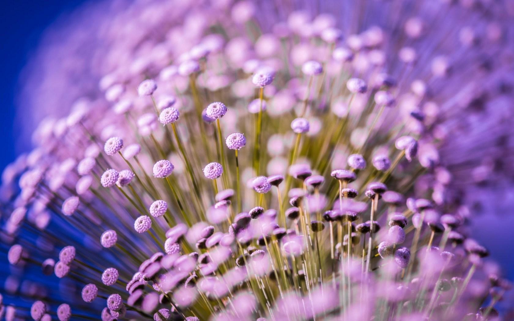 purple flower A5