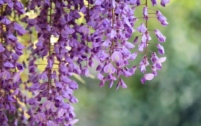 purple flower A6